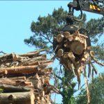 La Plataforma en Defensa del Transporte de Madera en Galicia y Asturias decide parar el suministro de mercancía a ENCE. La papelera recuerda que exige que los transportistas respeten estrictamente el Código de Circulación